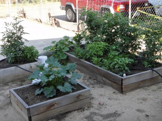 Our 2012 garden